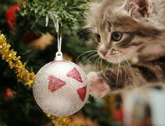 Pets and Holiday Safety